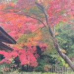 日本庭園🍂